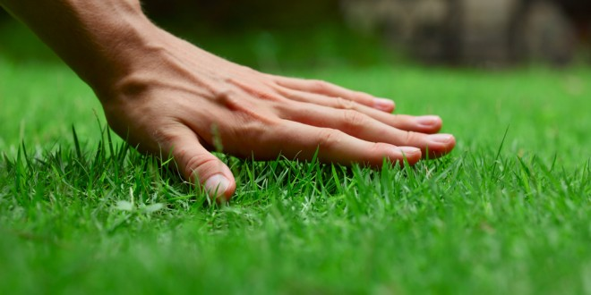 Tips for a Healthy and Budget-Friendly Lawn