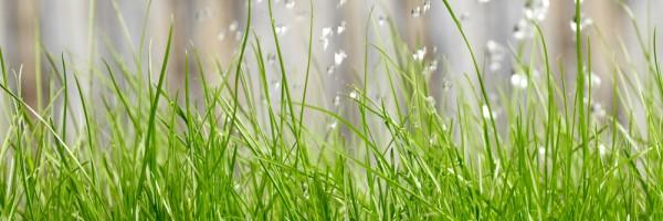 irrigation_95542618