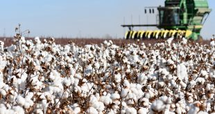 Texas Cotton & Conservation
